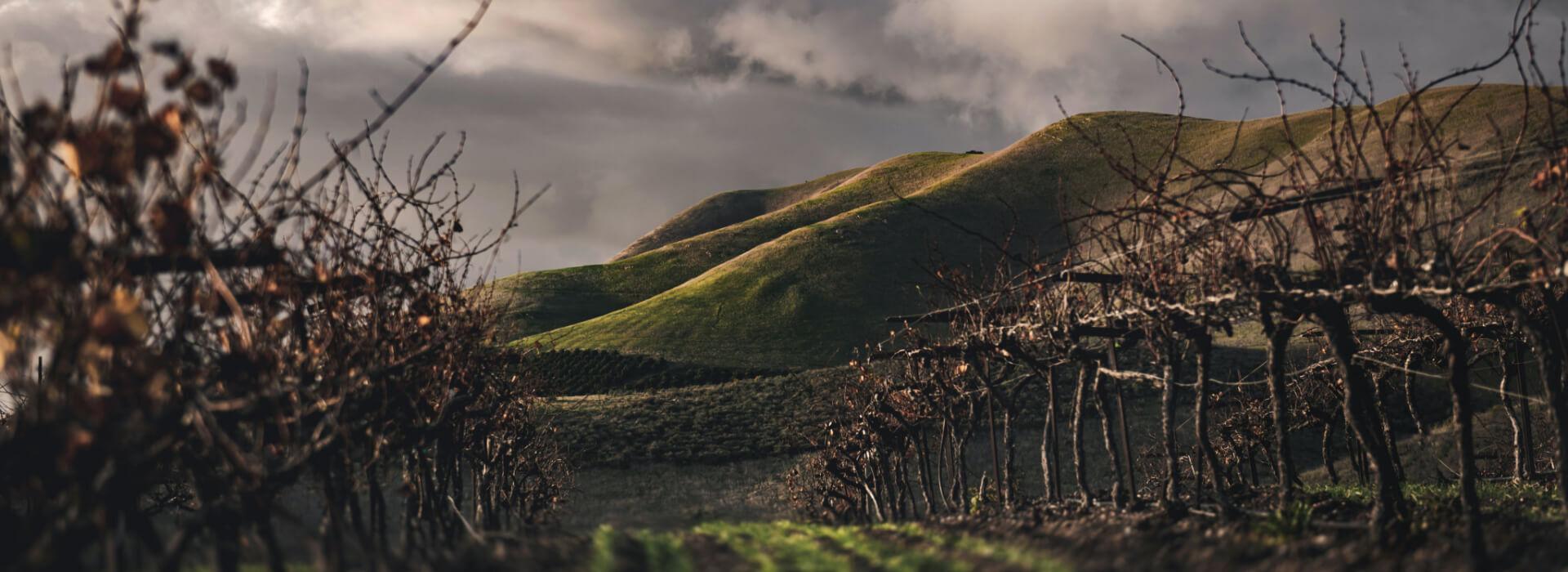 A Winelands Winter